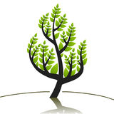 Tree. Stylized tree symbol, abstract nature icon design Royalty Free Stock Photos