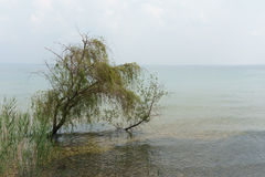 Tree submerged by a high tide Royalty Free Stock Images