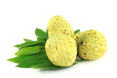 Tree Sugar Apple and leaves Royalty Free Stock Photography