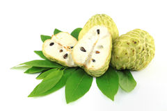 Tree Sugar Apple and leaves Royalty Free Stock Images