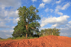 Tree in summer Royalty Free Stock Photography