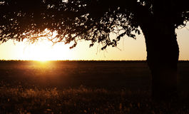 Tree in the summer field. Stock Photos