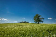 Tree in summer landscape Stock Images