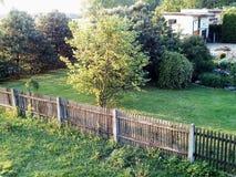 Tree. Summer love flora fauna Stock Photography
