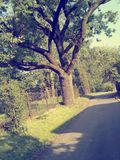 Tree. Summer time house flora fauna goodday Royalty Free Stock Image