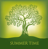 Tree. summer time.spring. Tree is green. summer time. spring Royalty Free Stock Images