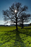 Tree and Sun. Royalty Free Stock Photography