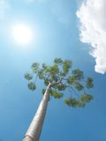 Tree and sun Royalty Free Stock Image