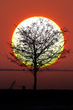 Tree and sun Royalty Free Stock Photo