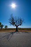 Tree with the sun behind Royalty Free Stock Images