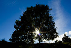 Tree and sun with blue sky Royalty Free Stock Photo