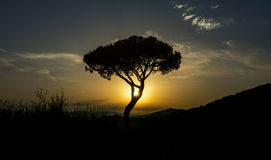 Tree with the sun among the brunches. Forming shadows Royalty Free Stock Images