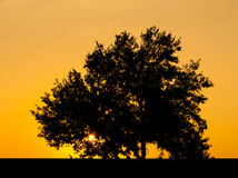 Tree with sun and color red  yellow sky Stock Photos