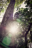 Tree with the sun Royalty Free Stock Images
