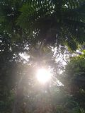 The tree and sun light in the sky and green tree royalty free stock image