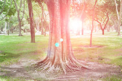 Tree and sun light in spring forest Stock Images