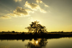 Tree with sun set and reservoir Stock Photos