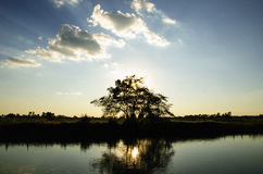 Tree with sun set and reservoir Royalty Free Stock Images