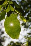 Tree with Sun Sheet Stock Photos