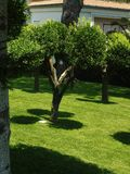 Tree sun simple garden Royalty Free Stock Image