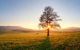Tree and sun Stock Image