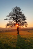 Tree and sun Royalty Free Stock Photography