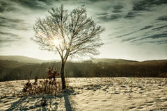 Tree with sunbeam and lens flares at winter HDR. Image with black gold filter Royalty Free Stock Photos
