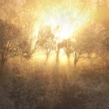 Tree sunburst royalty free stock images
