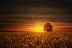 Tree with sundown Royalty Free Stock Image