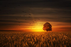 Tree on sundown Royalty Free Stock Photos