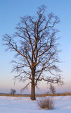 The Tree on sundown Royalty Free Stock Photography