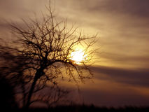 Tree and sundown conceptual image. Royalty Free Stock Photo