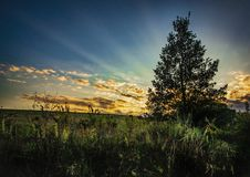 Tree in the sundown stock image