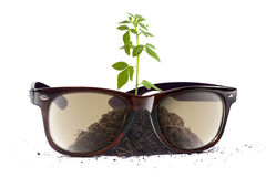Tree in Sunglasses Stock Photo