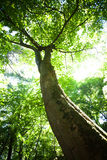 Tree in sunlight Royalty Free Stock Photography