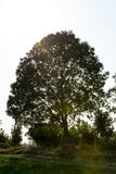 A tree in the sunlight with some lens flares. It is a clear day and the sun is shining stock image