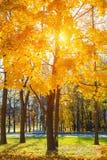 Tree in sunny autumn park Royalty Free Stock Photo