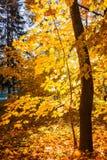 Tree in sunny autumn park Stock Photo