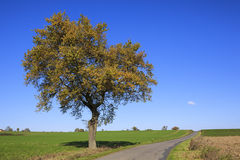 Tree on a sunny day in autumn Stock Image