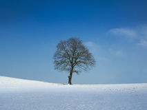 Tree on sunny winter day Royalty Free Stock Image