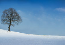 Tree on sunny winter day Royalty Free Stock Photography