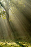Tree with sunrays Royalty Free Stock Images