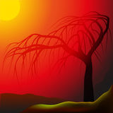 Tree in sunrays Royalty Free Stock Image