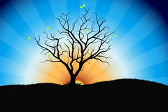 Tree sunrise Stock Image