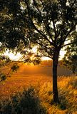 Tree in a sunrise royalty free stock images