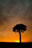 Tree in sunrise. A lone tree in the sunrise on the Masai Mara plains in Kenya, Africa Stock Photo