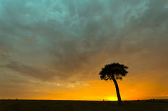 Tree in sunrise. A lone tree in the sunrise on the Masai Mara plains in Kenya, Africa Royalty Free Stock Photos