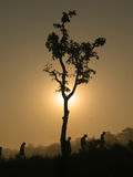 Tree on sunrise. Lonely tree on suntise and trekkers. Nepal, Chitwan Royalty Free Stock Photography