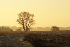 Tree in sunrise. Tree on the Strabrechtse heide in the Netherlands, sunrise in the early morning Stock Images