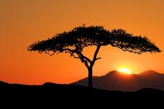 Tree at sunrise Stock Photos